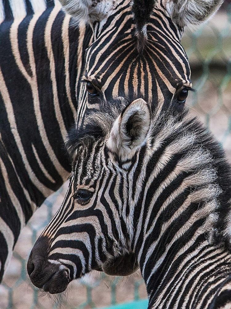Малыш первое время находится с мамой