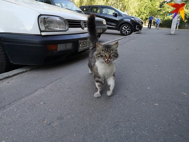 Местный кот также просит не упоминать своего имени, боясь репрессий хозяйки.