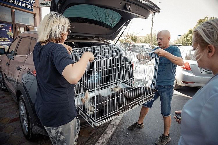 По словам сотрудников приютов «Поводог», стерилизация — единственный гуманный способ регулирования численности безнадзорных животных.