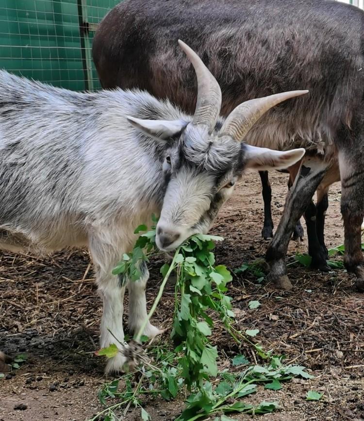 """Экспозиция копытных в """"Зоопарке на Фортуне"""" по-прежнему разнообразна. Фото: Иркутская зоогалерея"""