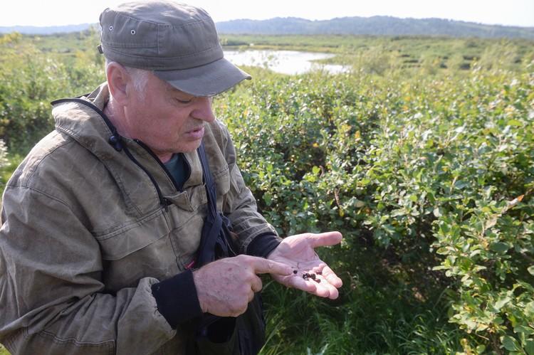 Для наживки ученые использовали кедровые орешки, вымоченные в рыжиковом масле, так как сильнее всего грызунов привлекают пахучие нерафинированные масла