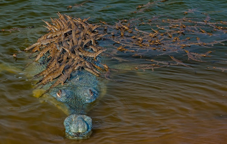 Dhritiman Mukherjee, India / Wildlife Photographer of the Year