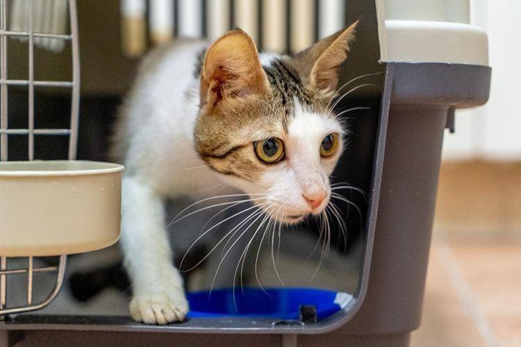 """Кошка Василиса ищет дом. Фото: приют помощи животным """"Мягкие сердца"""""""