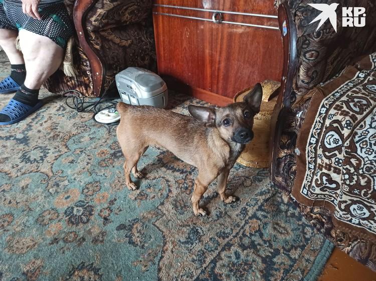 Валя мечтает стать ветеринаром, она спасла двух собак с улицы.