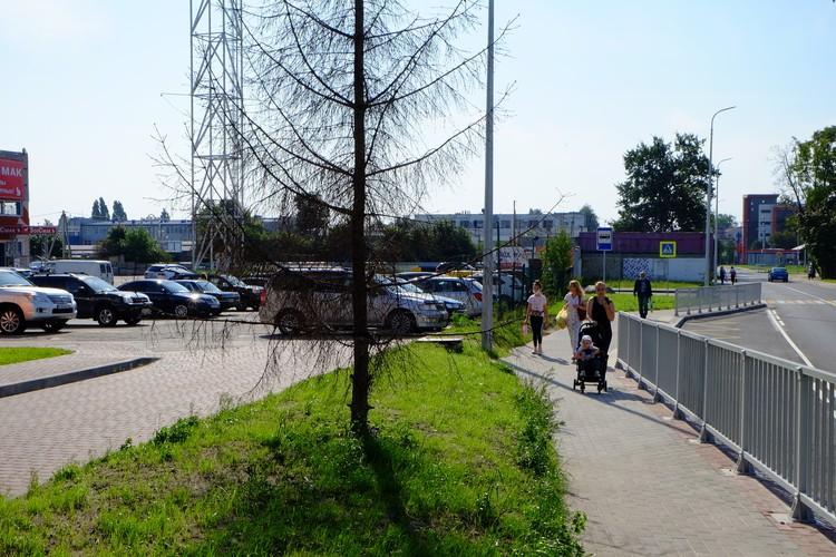 Некоторые деревья, которые решено было оставить, реконструкции не перенесли.