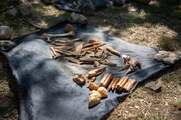Каждый день ученые находят в грунте порядка десяти костей животных. Фото: Пресс-служба КФУ