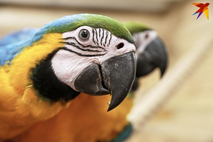 Птичник искать не пришлось – щебетание слышно издалека.