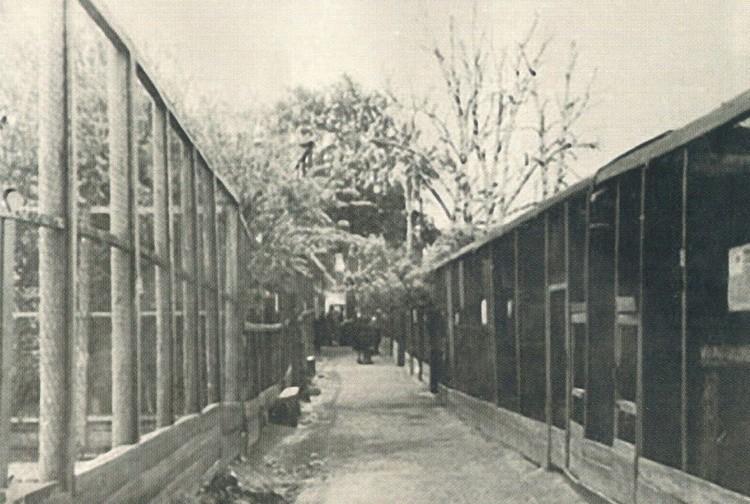 Вольеры для хищных животных в советские годы. Фото: Екатеринбургский зоопарк