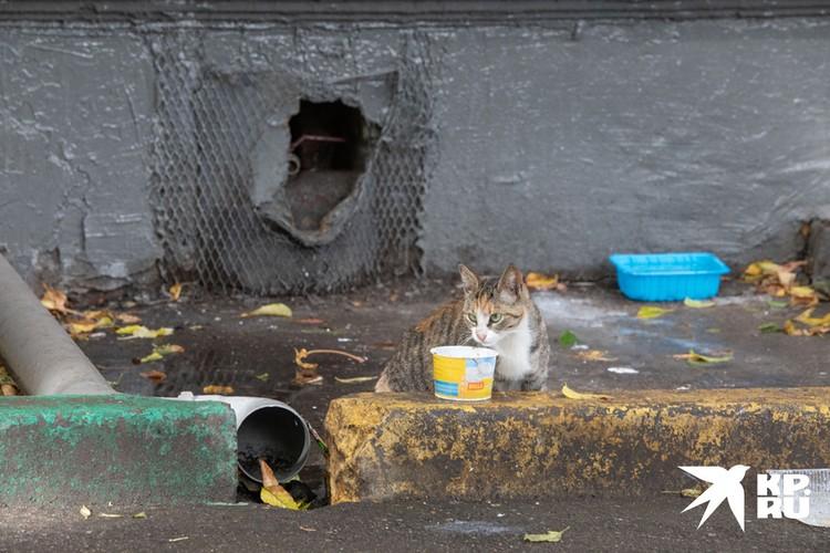 Кот на фоне вскрытого подвального продуха.