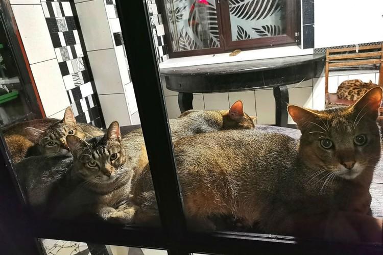 Даже коты в зоогалерее - и те до сих пор дрожат.