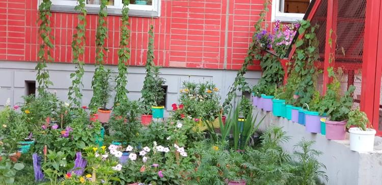 От балкона до газона: цветы везде. Фото: Валентина Тремарева.