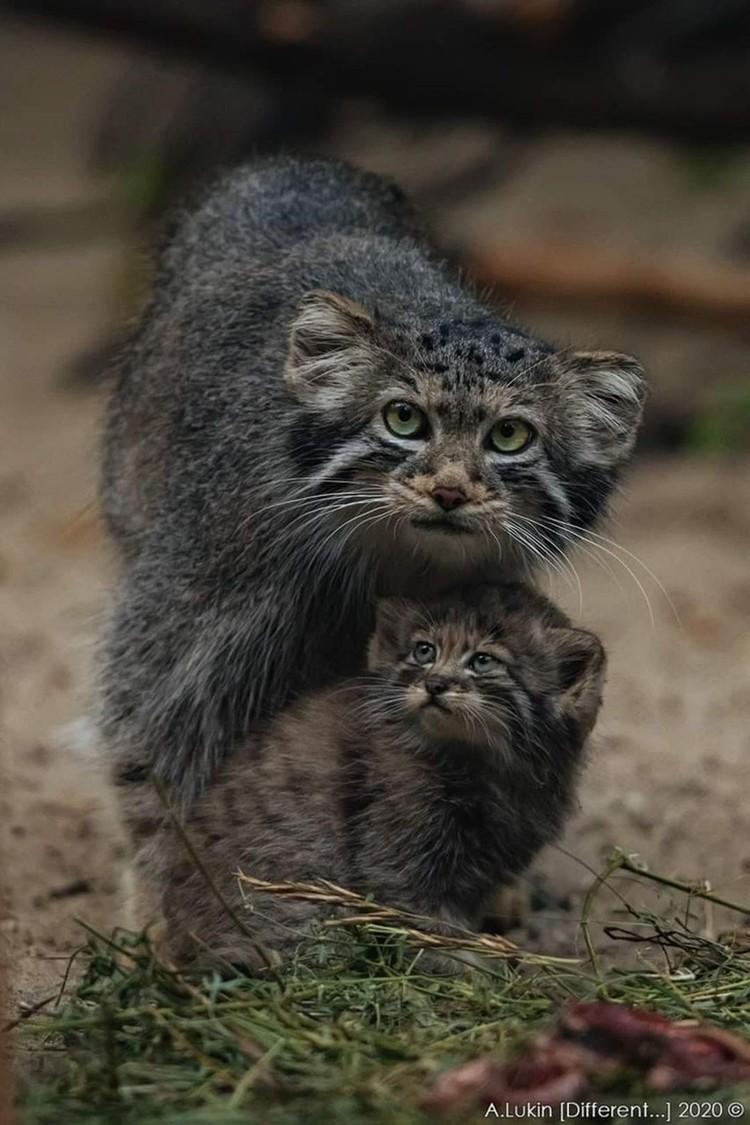 В июле родилось сразу 16 детенышей у трех самок. Фото: новосибирский зоопарк