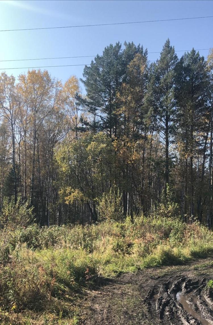 """Вот такой лес: с виду как рощица, на самом деле непроходимый. Фото: Анастасия Мосина, """"Канск 5 канал"""""""