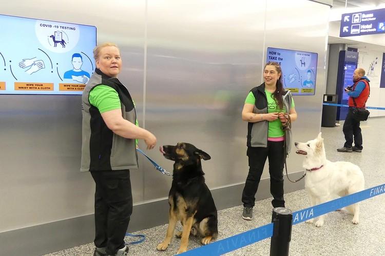 Группа из четырех собак с кинологами работает в основном в зале прилета международных рейсов.