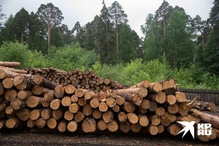 Еще одна проблема - защита леса.