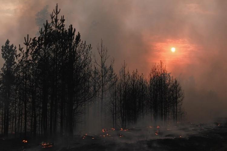 Ландшафтные пожары в Воронежской области.