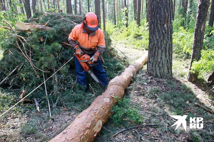Кругляк составляет 85–90% от общего экспорта древесины из РФ
