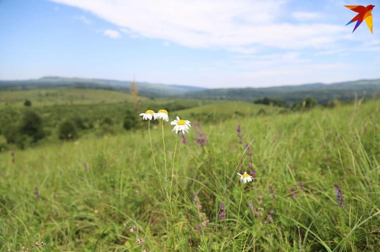 В этих краях растет более 90 видов лекарственных трав