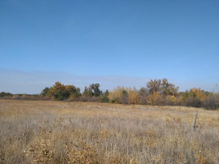 На месте лужайки вырастет новая дубрава. Фото администрации ВО.
