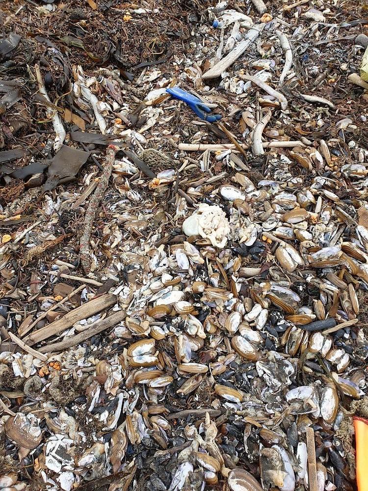 Мертвые морские обитатели, которых выбросило на берег. Фото: Александр Федотов и Виталий Шикора