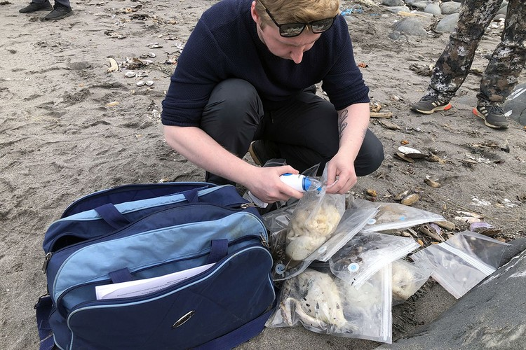 Трупы морских животных, выброшенных на берег, отправили на исследование. Фото: Ульяна Бакуменко/ТАСС