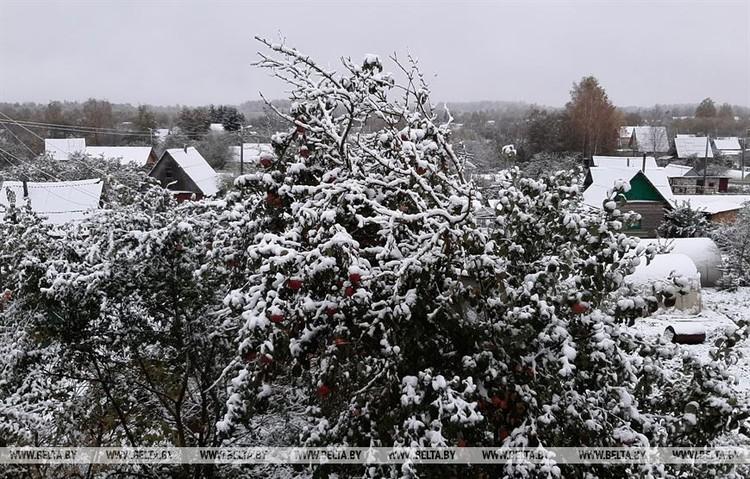 Снег на Витебщине. Фото: belta.by