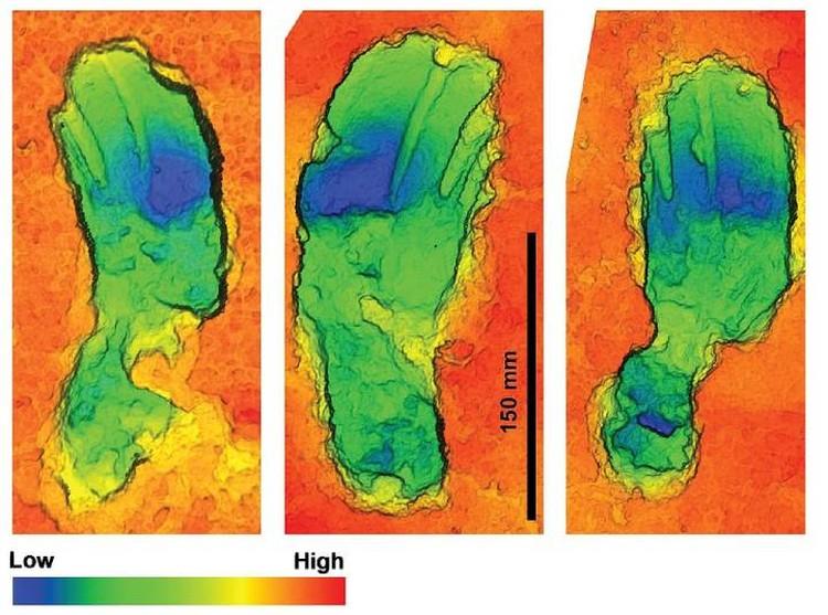 Особенностит походки ученые выявляли по форме и глубине следов.
