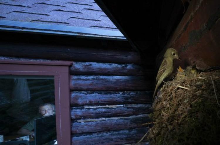 Алекс Бадяев. «Смотрю, как ты смотришь». Победитель в категории «Городская дикая природа». Фото: © Alex Badyaev/Wildlife Photographer of the Year 2020