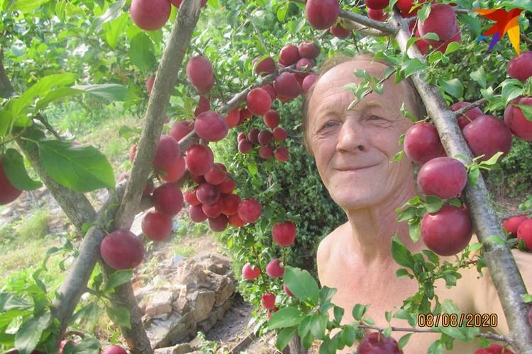 Яскевич любит похвастаться хорошим урожаем. Вот это - сливы. А есть еще алыча, ежевика, яблоки... Фото: личный архив.