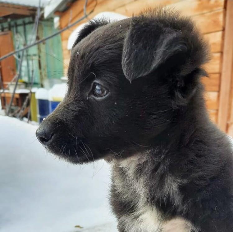 Лелеки оказался девочкой, поэтому получил новое имя - Бусинка. Фото: https://vk.com/verniydrugnsk
