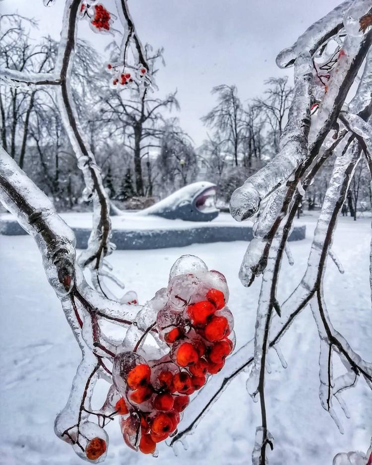 Деревья, трава и даже цветы покрылись ледяной глазурью. Фото: Яна Савинова, instagram.com/jane_savinova