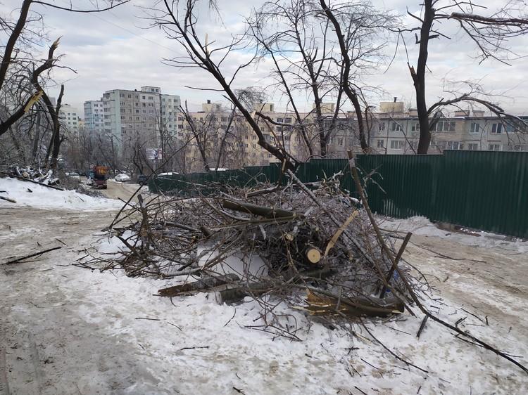 Стихия тоже не пощадила деревья