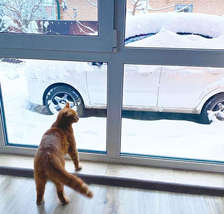 Такому снегопаду удивляются даже коты.