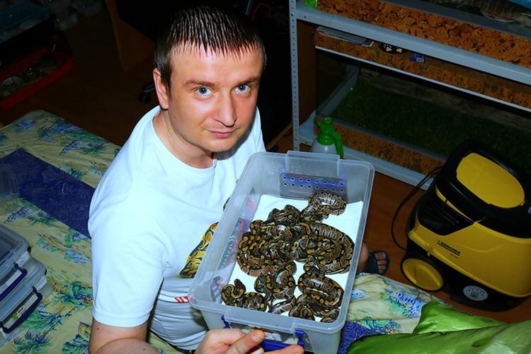 Змеи неприхотливы - Андрей кормит их 12 раз в год. Фото: Минск-Новости.