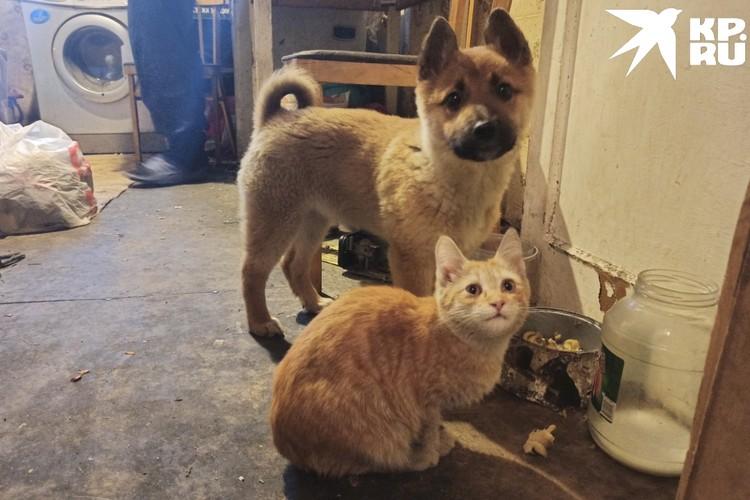 Школьница мечтает стать ветеринаром, души не чает в животных