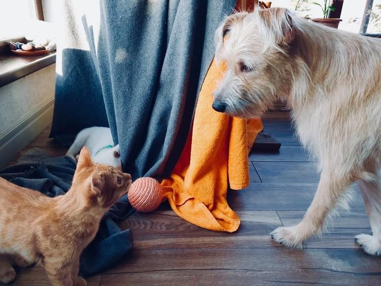 Собака, спасенная из отлова, быстро подружилась со всеми животными в квартире, где она жила на передержке. Фото: приют «Теремок»