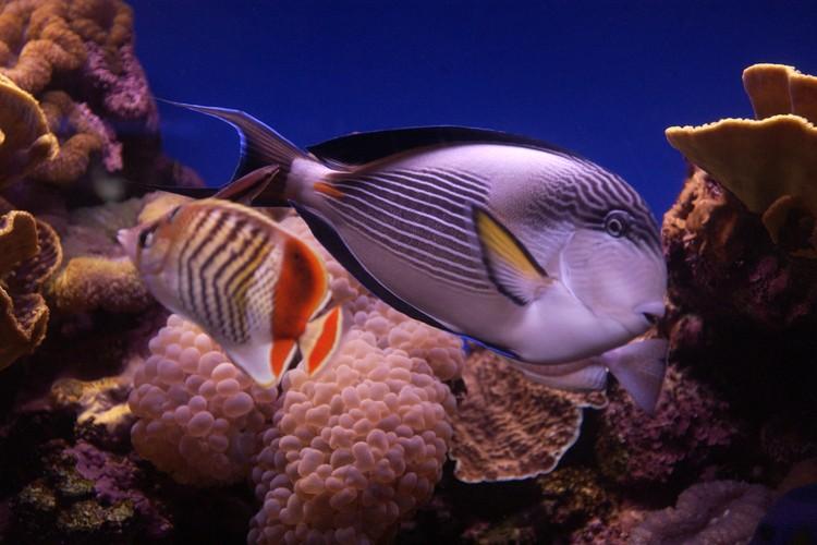 На выставке посетители могут увидеть самых необычных обитателей водных глубин.