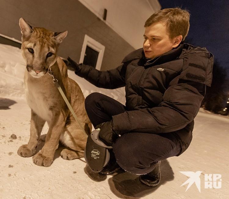 Москвич понимает, что в ближайшие 15-20 лет в отпуск ему не съездить: пуму нужно выгуливать.