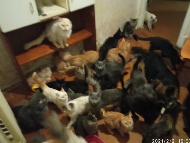 38 котиков.