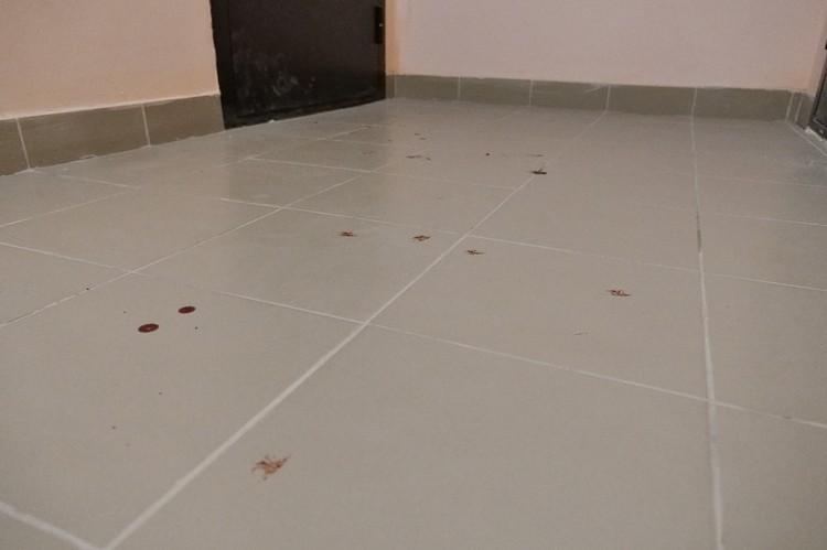 Следы крови в подъезде, в лифте и около съемной квартиры, где Анна жила с дочкой