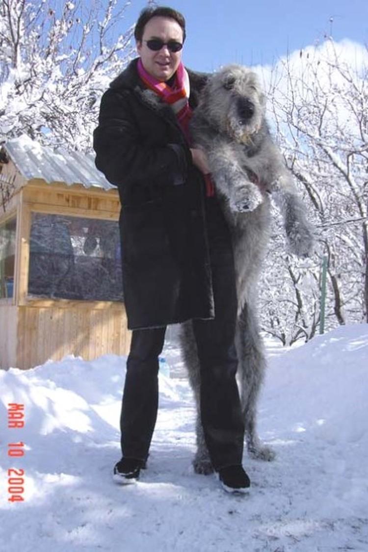 Кроме спорта и работы новый друг Анжелики Агурбаш любит еще разводить и ирландских волкодавов.  В 2003 году ее пес Дарик даже стал лучшим среди юниор породы!