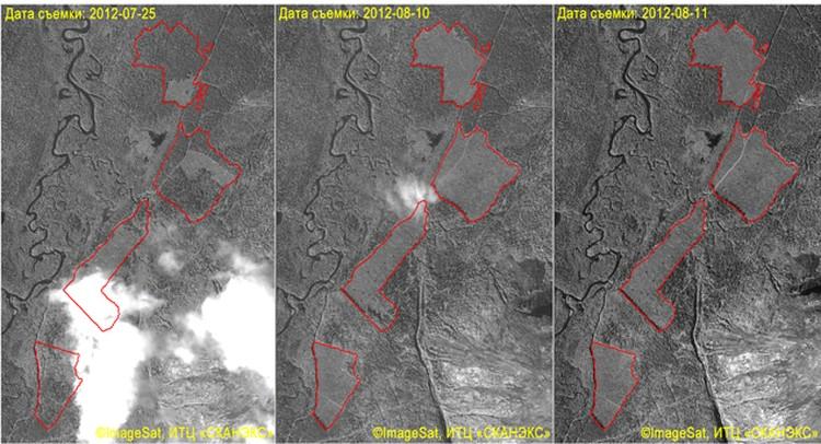 За пару недель площадь вырубок лесного массива увеличилась в 5 раз.