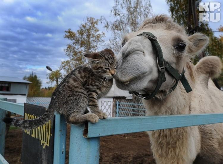 В приюте есть своя ферма. Здесь живут верблюды, лошади, фазаны, павлины, песцы и енотовидные собаки.