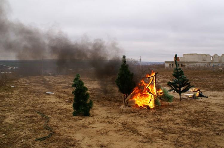 Горели елки ярко, а дым стоял столбом