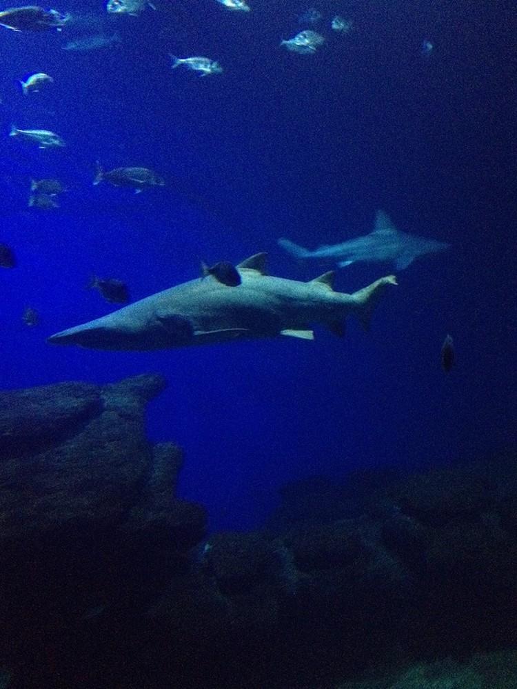 Ужин с акулами - экстравагантно, весело и абсолютно безопасно.