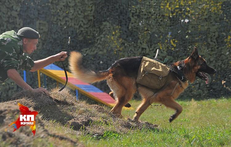 Школе служебных собак исполнилось 90 лет
