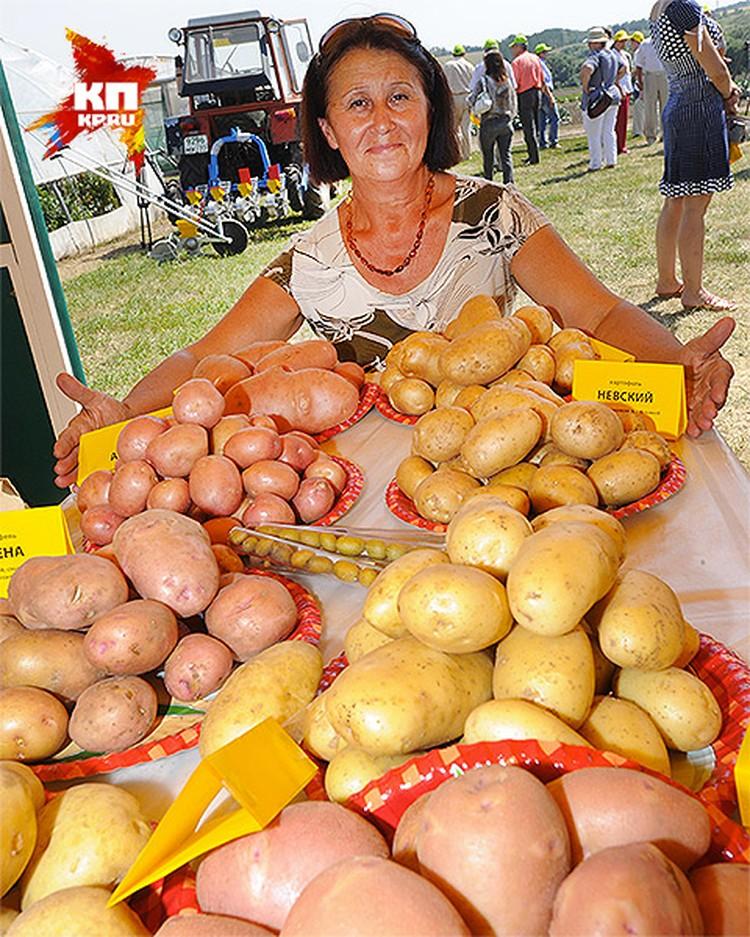 Если же вы всерьез надумали стать опытным картофелеводом, то в первую очередь отправляйтесь на садово-огородную выставку или в специализированный магазин.