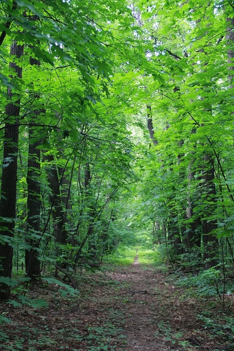 Зеленые аллеи кажутся бесконечными.