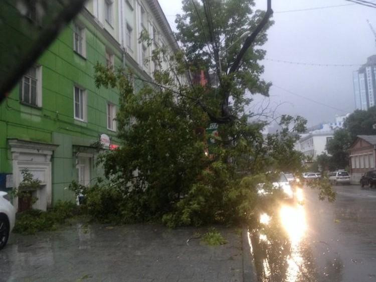 На улице Пушкинская упавшее дерево перекрыло дорогу пешеходам. Жаль, а ведь могло бы еще расти и расти... Фото: forums.drom.ru/vladivostok/